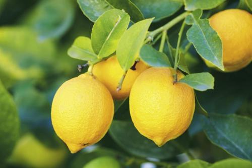 Limoni »